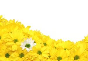 花 白と黄色