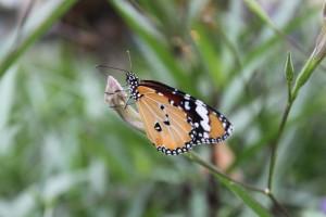 東門城の近くにいた蝶