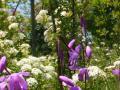 花とトンボ